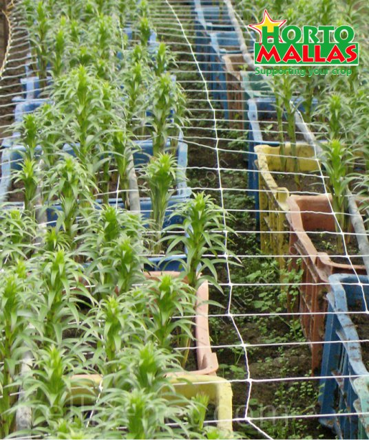 Flower production with trellis net support
