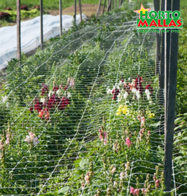 Horizontal trellis net support on ornamental flower production