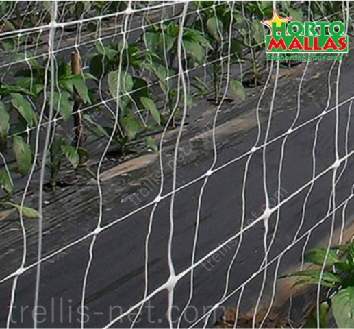 Trellis net training pepper at greenhouse production